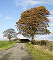 Roadside Trees - geograph.org.uk - 612978.jpg