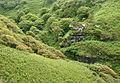Rocky Valley, Tintagel (4953).jpg