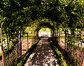 Rose Tunnel at Tyntesfield (3959810590).jpg