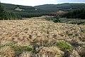 Rough grazing by the Trough Burn - geograph.org.uk - 1123372.jpg