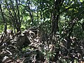 Rovine Monti Corno 2.jpg