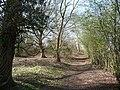 Runfold Wood - geograph.org.uk - 1217467.jpg