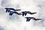 Russian Knights, Sukhoi Su-30SM (37183804376).jpg