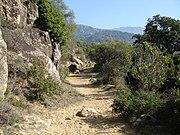 Path near Alcalá de los Gazules