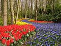 Rzeka kwiatów wśród drzew.JPG