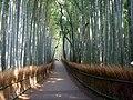 Sagano, Kyoto.JPG
