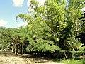San Juan Botanical Garden - DSC07050.JPG