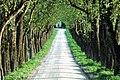 Sankt Georgen am Längsee Sankt Martin Birnbaumallee 01052004 01.jpg