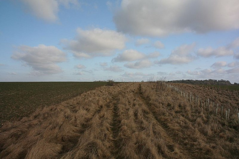 File:Saplings along the side - geograph.org.uk - 1772304.jpg