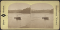 Scene on Lake George, from Robert N. Dennis collection of stereoscopic views 2.png