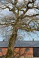 Schleswig-Holstein, Drage, Naturdenkmal 17 NIK 2065.JPG