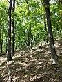 Schlossberg im Schwarzwald sl6.jpg
