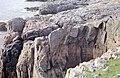 Sea Cliffs at Nibon - geograph.org.uk - 186492.jpg