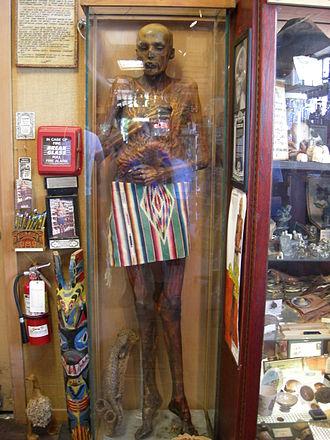 "Ye Olde Curiosity Shop - ""Sylvester"" the mummy."