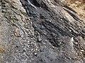 Semi-anthracite coal (Merrimac Coal, Lower Mississippian; Cloyds Mountain roadcut, Valley Coalfield, Virginia, USA) 5 (30196292280).jpg