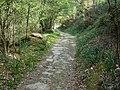 Sendero hacia el Puente de Carboeiro (2396548760).jpg