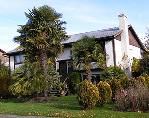 Sidney, British Columbia - This single-family house in Sidney features a collection of palms, including Chinese windmill palm.