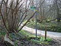 Sharp bend in the woods - geograph.org.uk - 386783.jpg