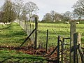 Sheep fields in Charlton Park. - geograph.org.uk - 323524.jpg