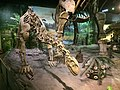Shunosaurus at Tianjin Natural History Museum.jpg
