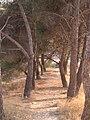 Sierra de la Villa. Pinada de Villa Ángeles.JPG