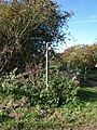 """Sign post at the """"Way for the Millennium near Stafford - geograph.org.uk - 1010145.jpg"""