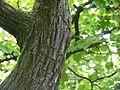 Silver Grey Wood (2661321272).jpg