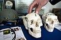 Skull hand technology.jpg