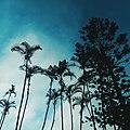 Sky View VI.jpg