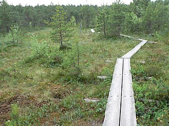 Peat energy in Finland - Bog in Finland