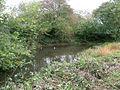 Small pond at edge of road near Arpinge - geograph.org.uk - 1583040.jpg