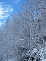 Snow from Winter Storm Skylar (12 March 2018) (near Frenchburg, Menifee County, Kentucky, USA) 1.jpg