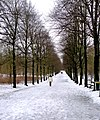 Snow in the city (4226694610).jpg