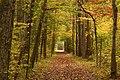 Sobers Run Trail (8072746151).jpg