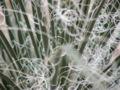 Spiky plant tendril.jpg