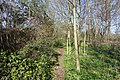 Spring @ Bois de Boulogne @ Paris (32805930654).jpg