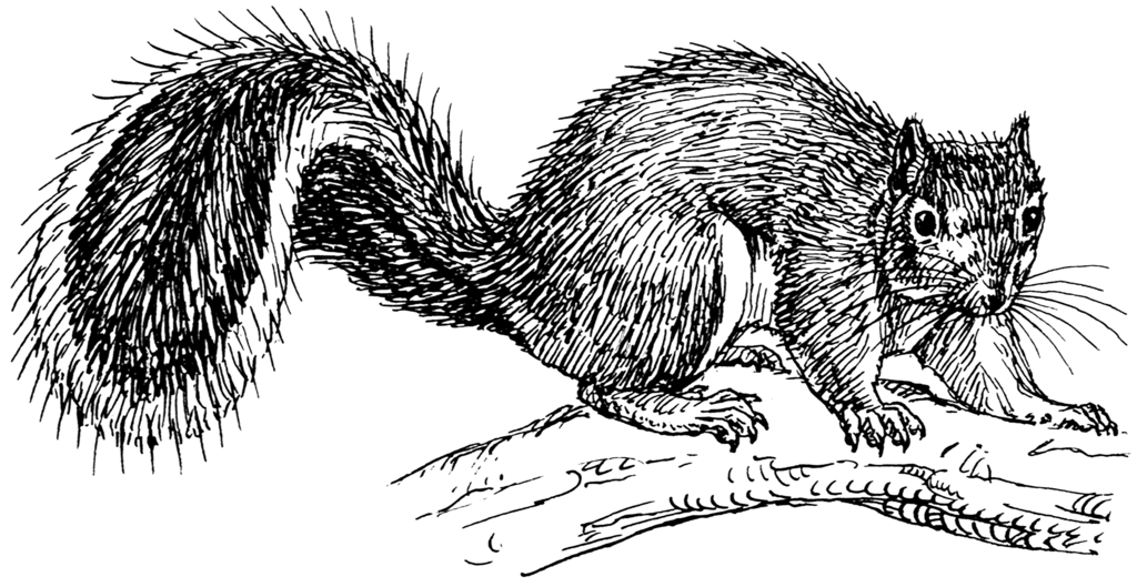 Image Result For Squirrel Coloring Pages