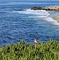 Squirrel watching over the coast in La Jolla (70337).jpg