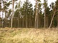 Standagainstall Plantation, Long Edge - geograph.org.uk - 324498.jpg