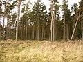 Standagainstall Plantation, Long Edge - geograph.org.uk - 324498.jpg