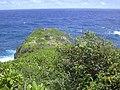 Starr-050406-0214-Schinus terebinthifolius-habit-Moku Mana-Maui (24116478503).jpg