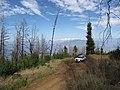 Starr-111005-0619-Sequoia sempervirens-habit rebounding after fire with Explorer-Polipoli-Maui (24491630573).jpg