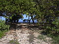 Starr 040125-0035 Thespesia populnea.jpg