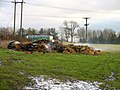 Steaming muck heap - geograph.org.uk - 1067594.jpg