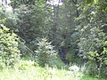 Stream at Haslingden Road, Oswaldtwistle - geograph.org.uk - 1408224.jpg