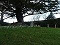 Studland , St Nicholas Churchyard and Snowdrops - geograph.org.uk - 1712559.jpg
