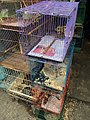 Sugar gliders, hedgehogs, turtles, and iguana in Jatinegara Market.jpg