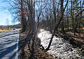 Sunlight on Fishing Creek - panoramio.jpg