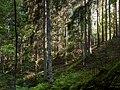 Sunny slope in Gullmarsskogen ravine.jpg