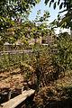 Suresnes - Jardins familiaux (9).JPG